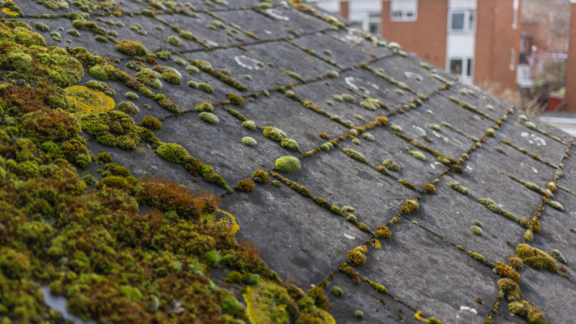"<span style=""color: #9ff71b;font-size: 27px; font-family: Open Sans;"">Coping with Rooftop Moss and Algae"