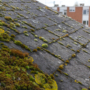 "<span style=""color: #9ff71b;font-size: 27px; font-family: Open Sans;"">Rooftop Moss and Algae"